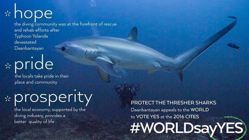 save-thresher-sharks philippines